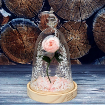 Light Pink Roses Wood Base